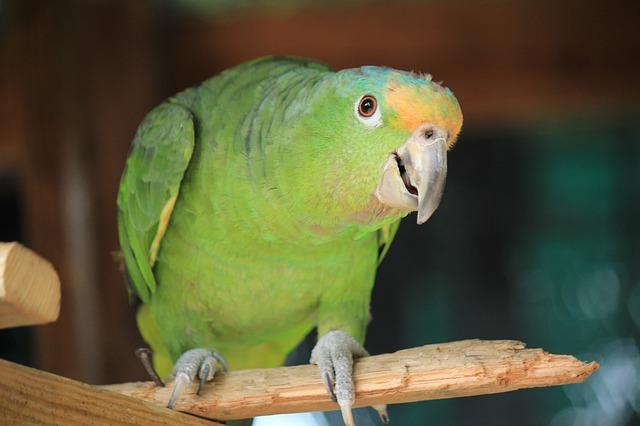 parrot-2679029_640